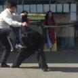 Démonstrations de prises et clés de bras en Tai Chi Tang Lang (style de Kung-Fu de la mante religieuse) avec Vang-Thang Michel NGUYEN et Thai-Nhat-Quan Romain NGUYEN lors du 2nd […]